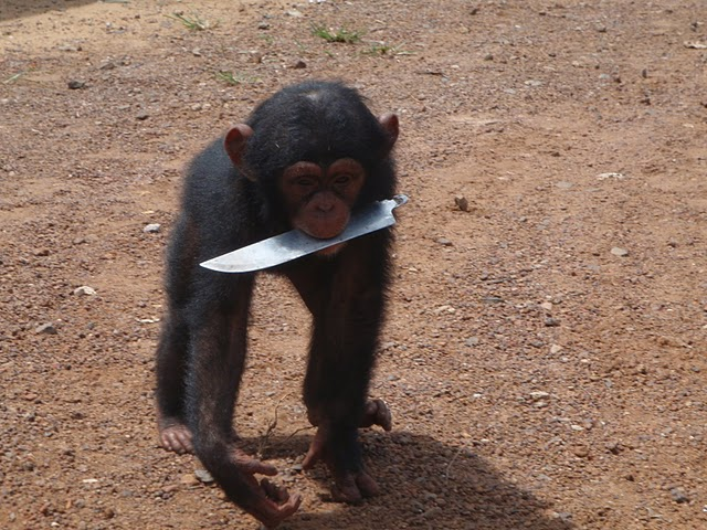 World Travel Photos :: Animals :: pet chimp @ Monrovia,Liberia