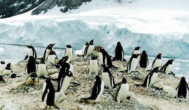 World Travel Photos :: Antarctica :: Antarctica. Penguins