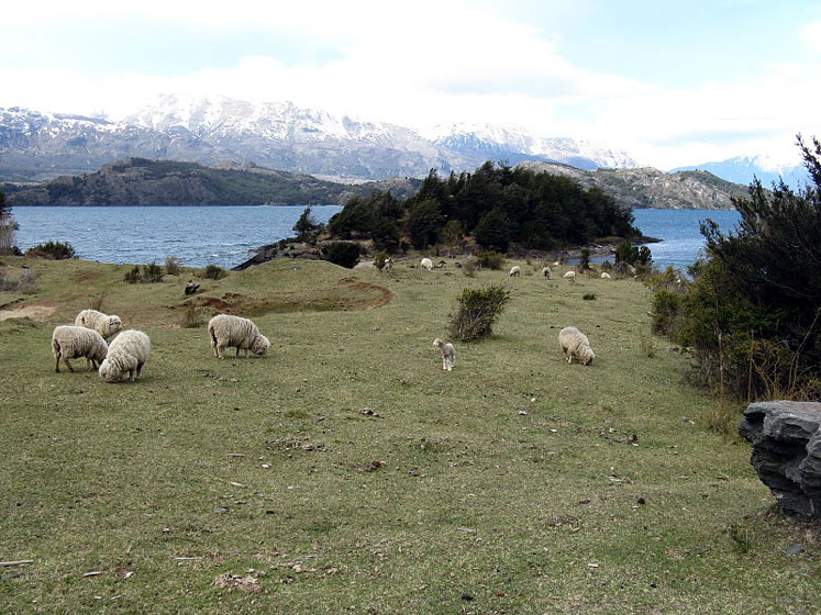 World Travel Photos :: Argentina - Misc :: Argentina - sheep and a little lamb