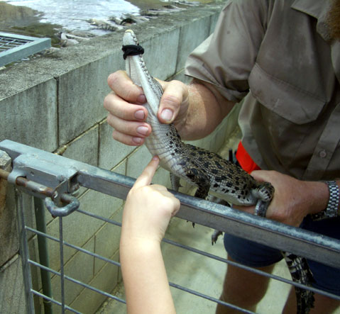 World Travel Photos :: Crocodile farms :: Australia. Little crocodile