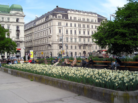 World Travel Photos :: Flowers :: Spring in Vienna