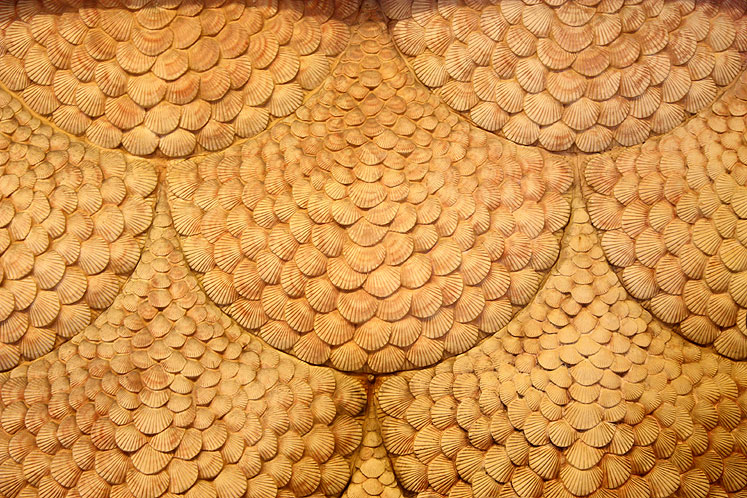 World Travel Photos :: Bahamas :: Nassau. A wall panel made of seashells in Hotel Atlantis