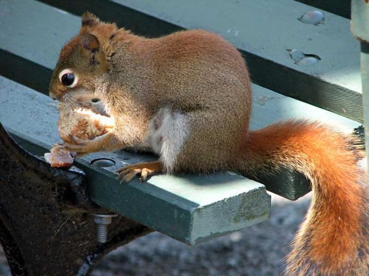 World Travel Photos :: Canada - Nova Scotia - Halifax :: Halifax. Public Gardens - a squirrel