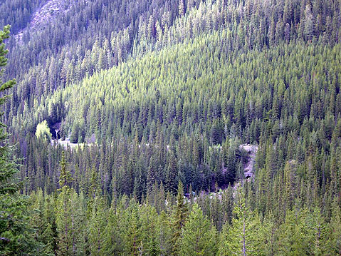 World Travel Photos :: Canada - Rocky Mountains :: Road through Canadian Rocky Montains