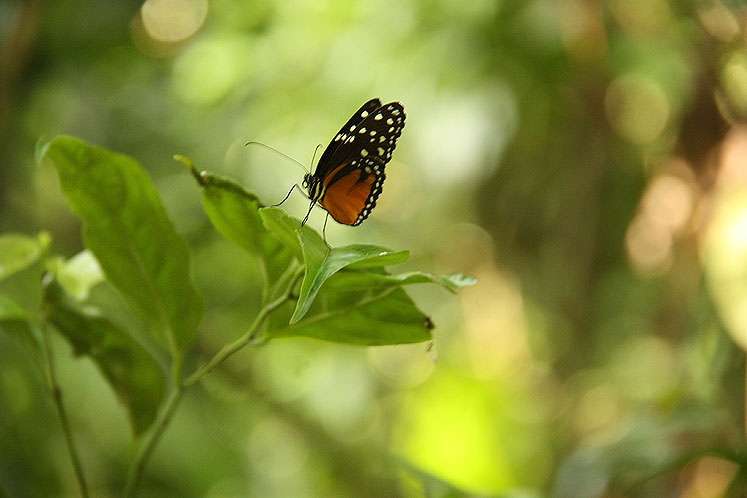 World Travel Photos :: Costa Rica :: Costa Rica. A butterfly