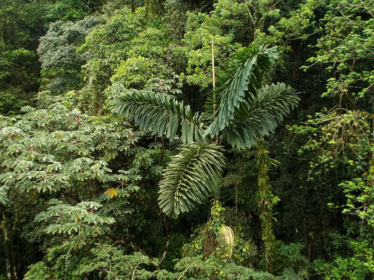 World Travel Photos :: Landscapes :: Costa Rica. Park Arenal - a view of the primary rainforest