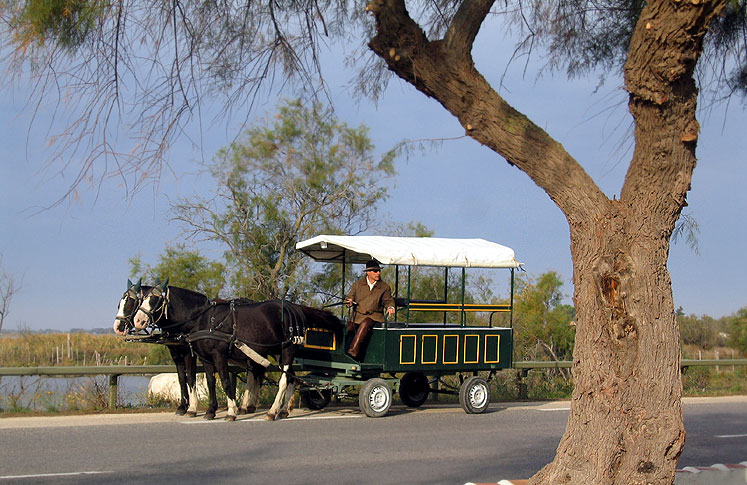 World Travel Photos :: France - Provence :: Provence. A carriage