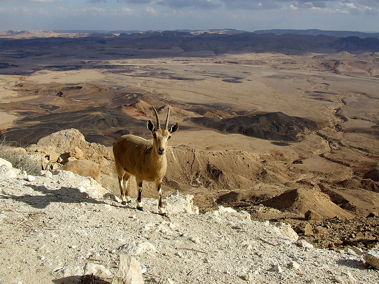 World Travel Photos :: Israel - Negev Desert :: Israel. Negev Desert - On the way to Eilat