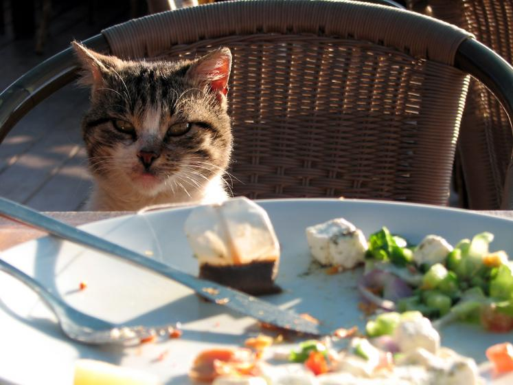 World Travel Photos :: Israel - Rishon LeZion :: Israel. Rishon LeZion - a local cat in the restaurant