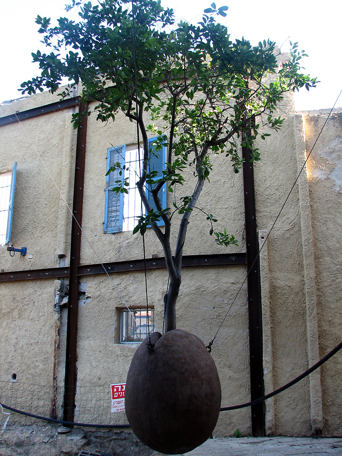 World Travel Photos :: Israel - Jaffa :: Jaffa - a hanging tree