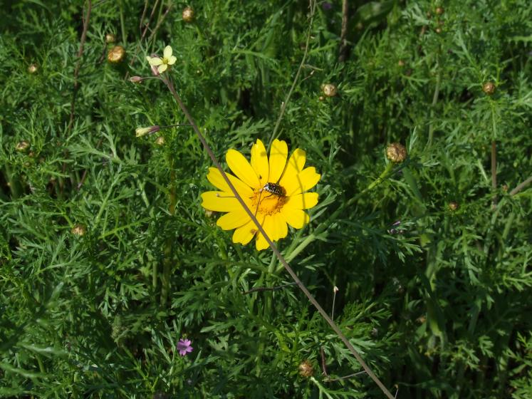 World Travel Photos :: Israel - Misc :: Israel. A wild flower