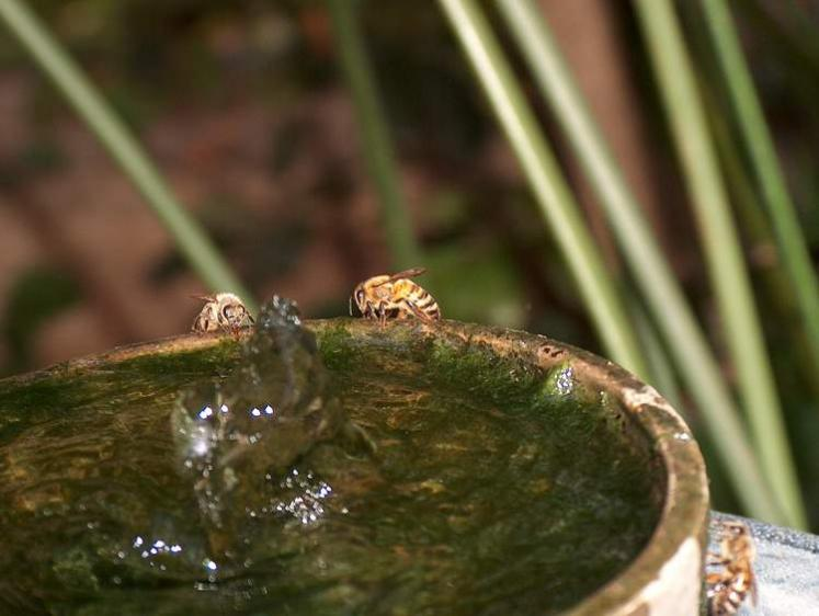 World Travel Photos :: Plants & Flowers ::  Israel. Bees drinking water