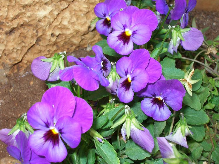 World Travel Photos :: Vered :: Israel. Flowers