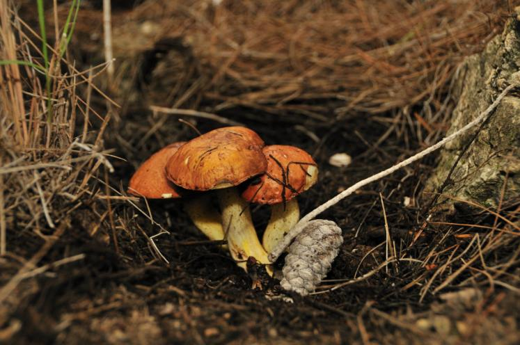 World Travel Photos :: Israel - Misc :: Israel. A mushroom family