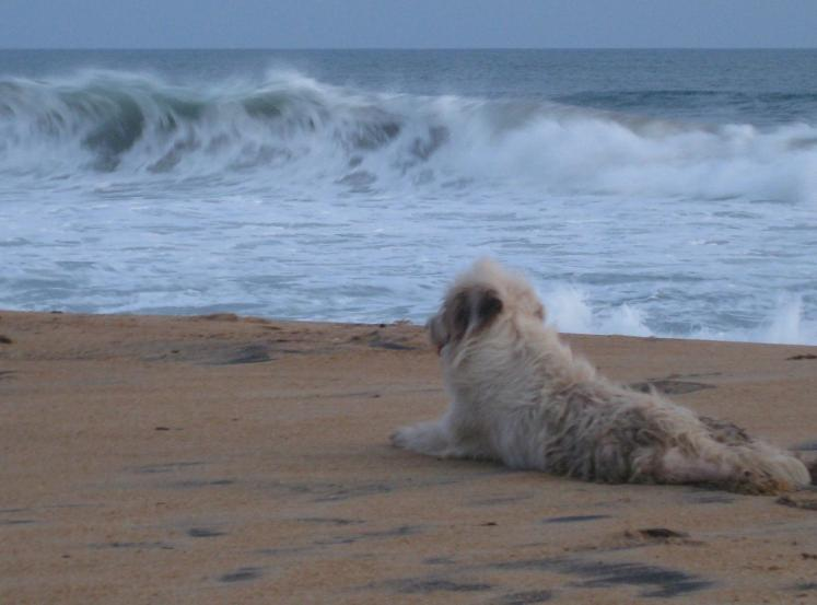 World Travel Photos :: Liberia - Misc :: Liberia´s Beaches - a dog on the beach