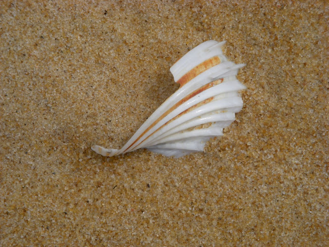 World Travel Photos :: Beaches :: Liberia, Africa - a sea shell