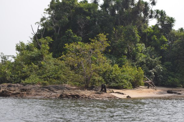World Travel Photos :: Liberia - Monrovia :: Chimpanzee Island, Marshall (liberia Africa)