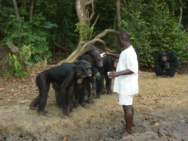 World Travel Photos :: Liberia - Monrovia :: Liberia, Africa - chimp island