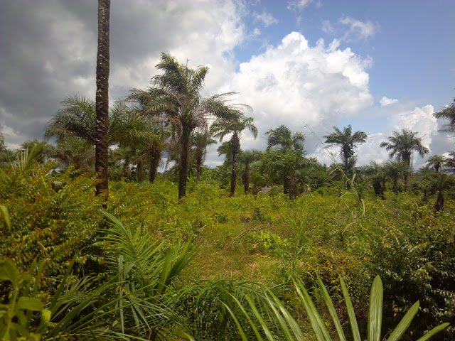 World Travel Photos :: Liberia - Monrovia :: Liberian landscape