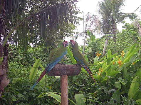 World Travel Photos :: Miulin :: Cancun. Parrots in Xcaret Park