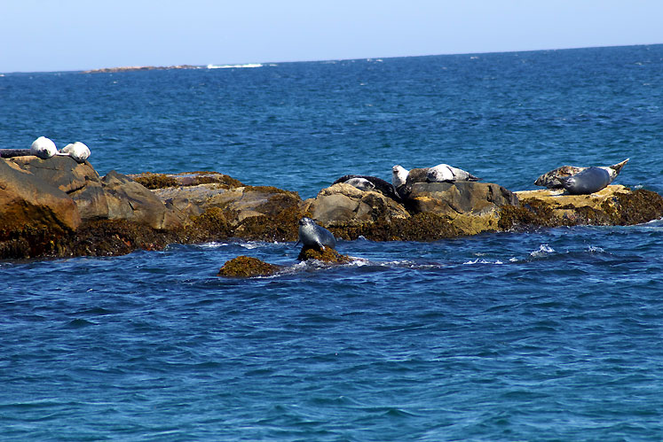 World Travel Photos :: Romsan :: Nova Scotia - seals
