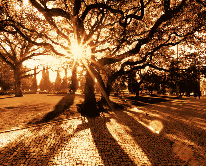 World Travel Photos :: Feel good photos :: Lisbon.  Park Jardim da Torre de Belém in January