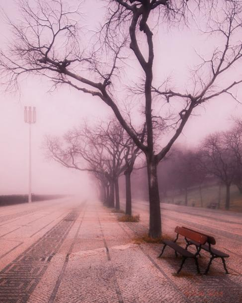 World Travel Photos :: Portugal - Lisbon :: Lisbon. Park in a fog