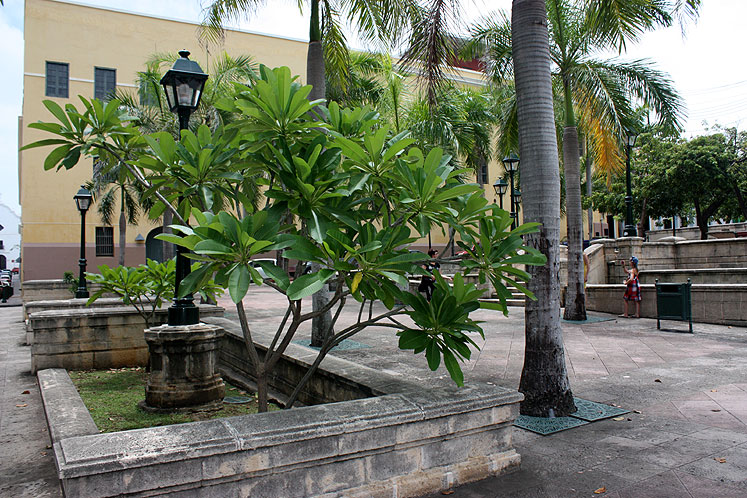 World Travel Photos :: Puerto-Rico - San Juan :: Puerto-Rico. San Juan - local plants