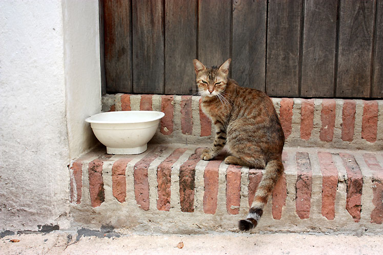 World Travel Photos :: Puerto-Rico - San Juan :: Puerto-Rico. San Juan - one of the many cats in the city