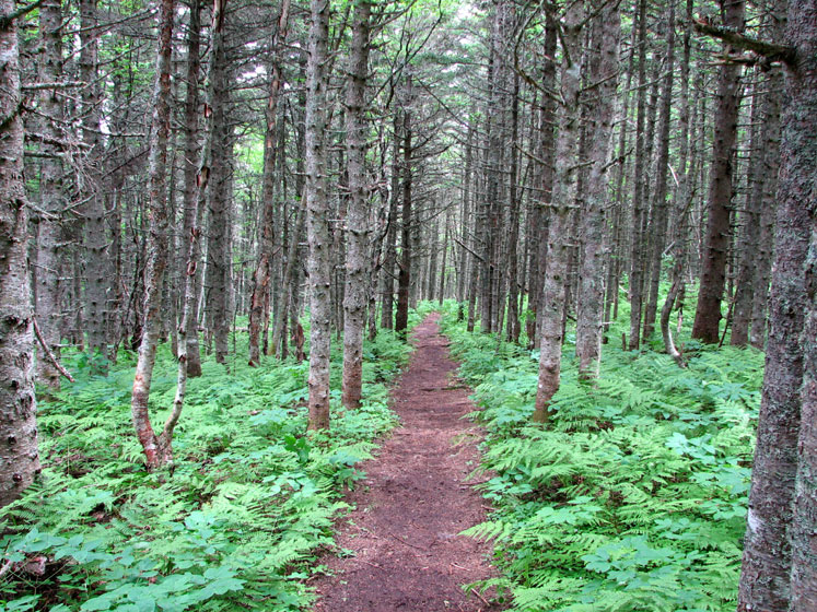 World Travel Photos :: Canada - Quebec - Bonaventure Island :: Quebec. Bonaventure Island (île Bonaventure) - a trail surrounded by ferns