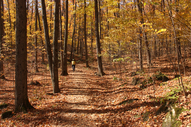 World Travel Photos :: Feel good photos :: Quebec. Gatineau Park - a golden season