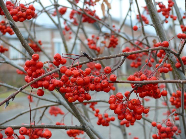 World Travel Photos :: Colors - Rouge :: Russia. Omsk District - winter food for birds