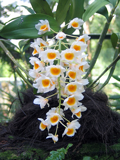 World Travel Photos :: tigraed :: Singapore. Orchids