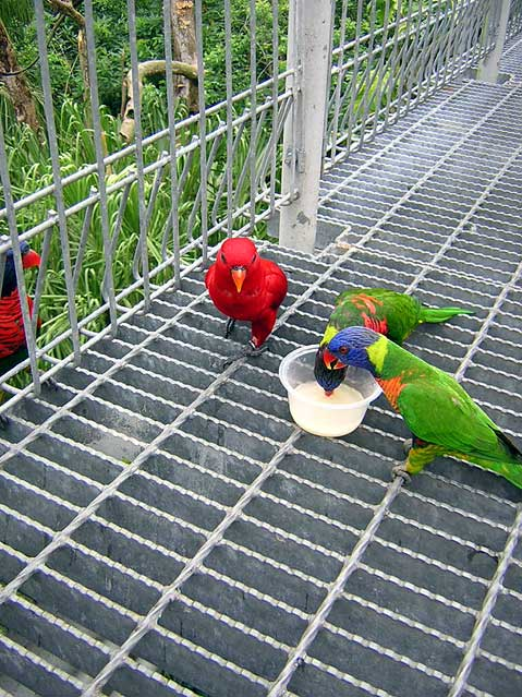 World Travel Photos :: Singapore :: Singapore. Jurong Bird Park
