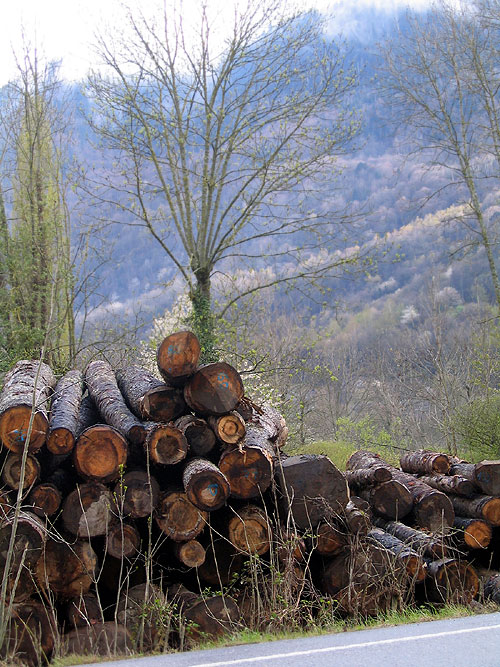 World Travel Photos :: Lel Keshet :: Spain. Firewood in Pyrenees