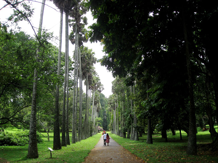 World Travel Photos :: Sri Lanka :: Sri Lanka. Botanical Gardens in Kandy