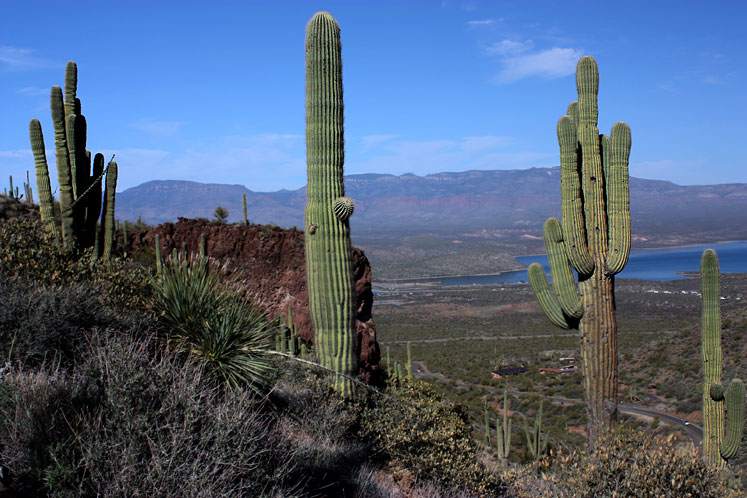 World Travel Photos :: USA - Arizona - Apache Trail :: Arizona. Saguaros along Apache Trail