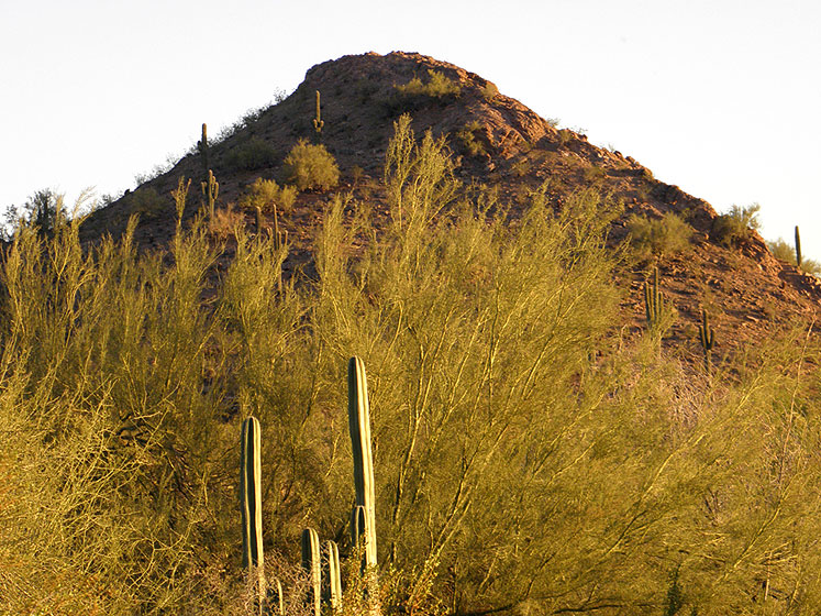 World Travel Photos :: USA - Arizona - Phoenix :: Phoenix Botanical Garden - a sunlit hill