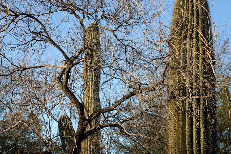 World Travel Photos :: USA - Arizona - Phoenix :: Phoenix Desert Botanical Garden