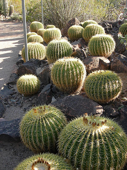 World Travel Photos :: USA - Arizona - Phoenix :: Phoenix. Desert Botanical Garden