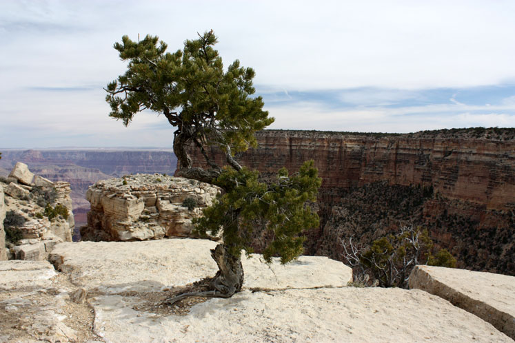 World Travel Photos :: USA - Arizona - Grand Canyon :: Arizona. Grand Canyon - a lonely tree