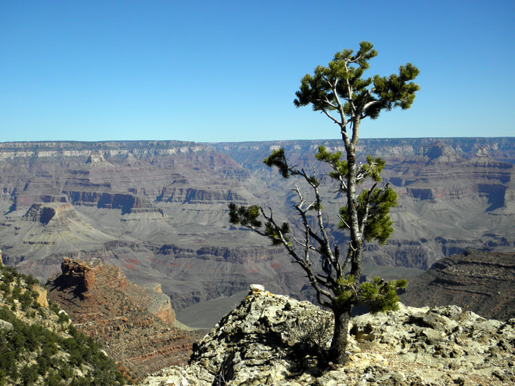 World Travel Photos :: USA - Arizona - Grand Canyon :: Arizona. Grand Canyon - a small tree