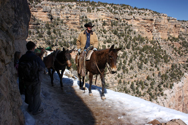 World Travel Photos :: USA - Arizona - Grand Canyon :: Arizona. Grand Canyon - Mules guide
