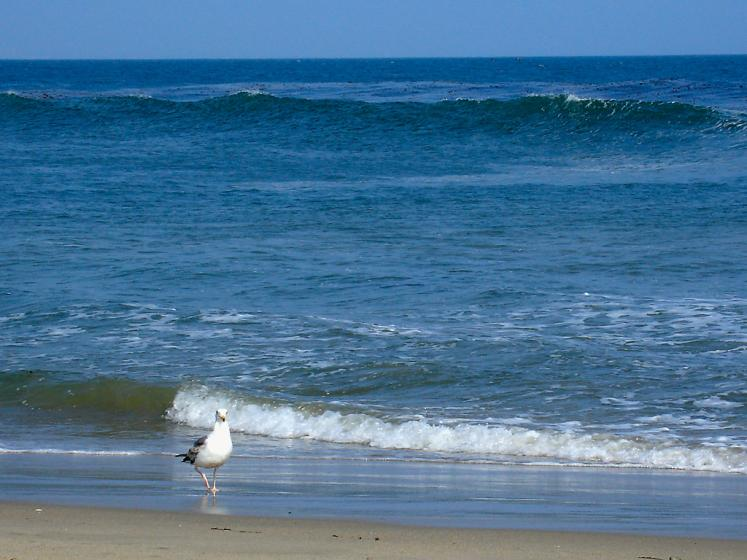 World Travel Photos :: USA - Misc :: Malibu. Ocean.