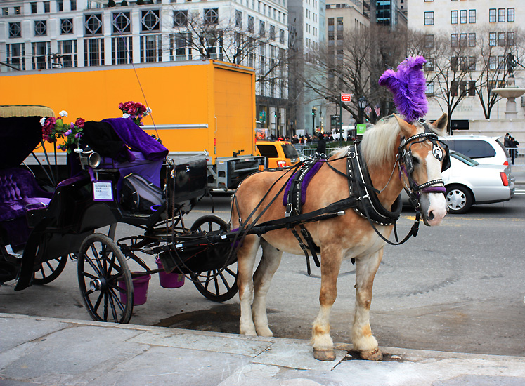 World Travel Photos :: Central Park :: NYC. A carriage of the Central park