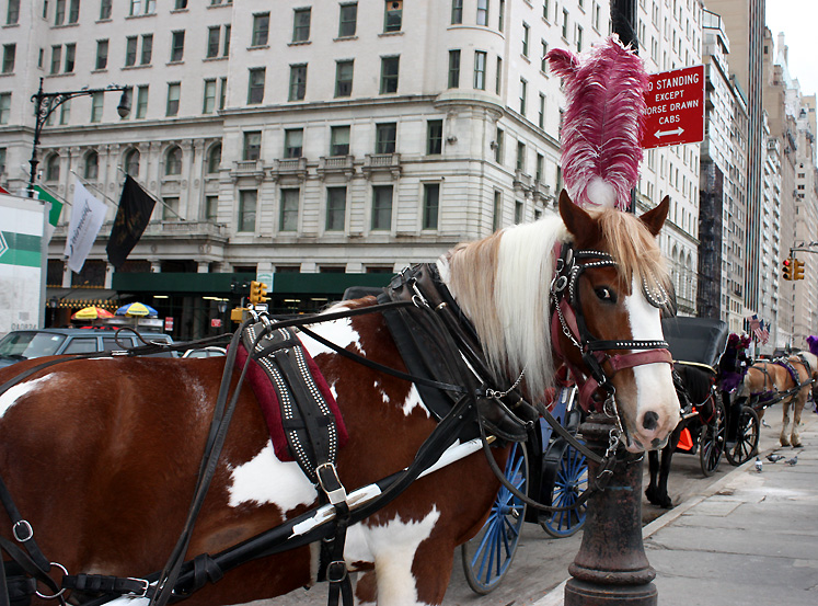 World Travel Photos :: Central Park :: NYC. Carriages for the Central Park rides