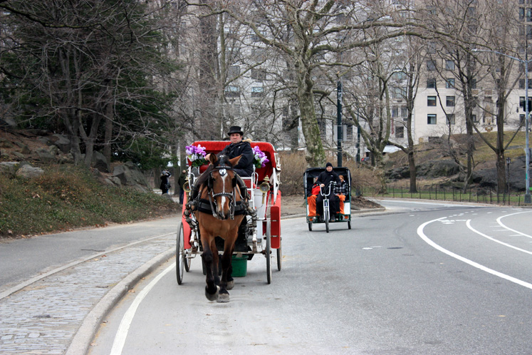 World Travel Photos :: Central Park :: NYC - a carriage in the Central Park
