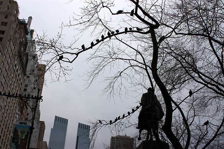 World Travel Photos :: Central Park :: NYC - birds in Central Park