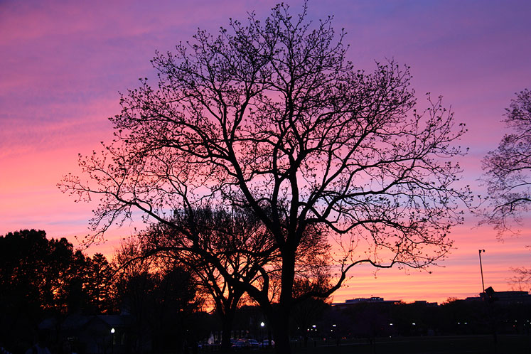 World Travel Photos :: visitor :: A beautiful sunset in Washington, DC