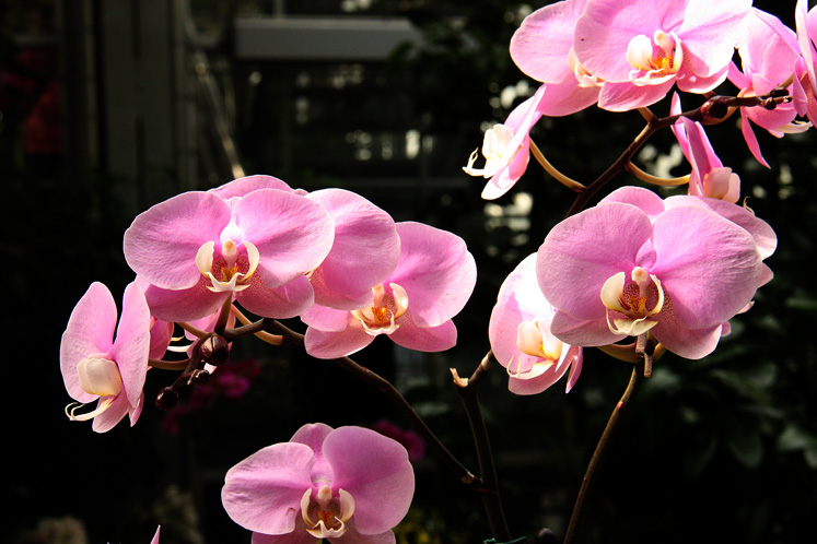 World Travel Photos :: USA - Washington, D.C. :: Washington D.C. - orchids exhibition